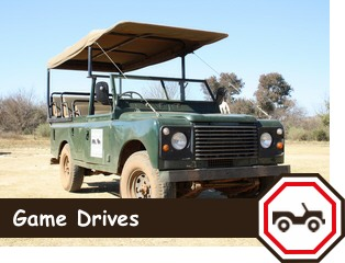 game-drives-rhino-lion-button